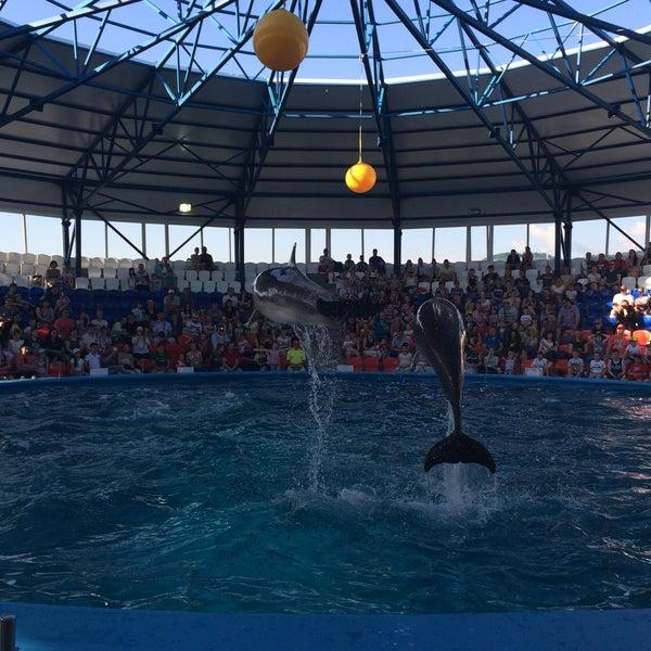 дельфинарий в рязани фото имеют