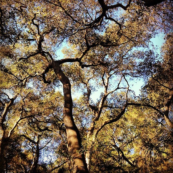 2/24/2013 tarihinde Cid P.ziyaretçi tarafından Descanso Gardens'de çekilen fotoğraf