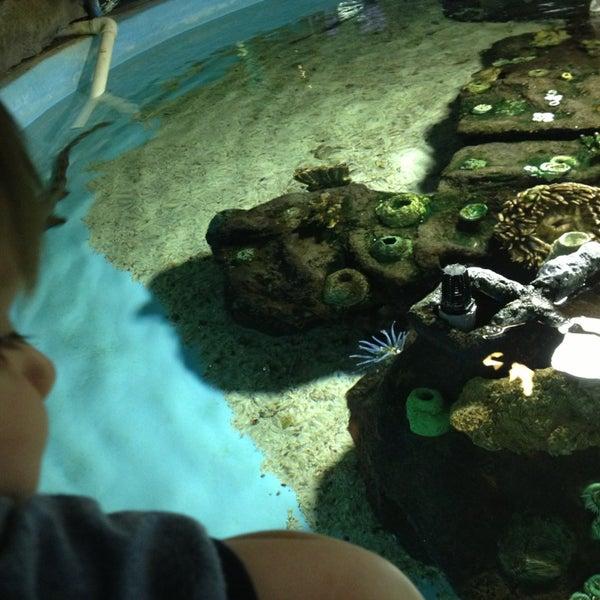 Foto tirada no(a) Las Vegas Natural History Museum por Stefanie K. em 6/20/2013