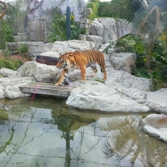 10/20/2012 tarihinde Jeremy W.ziyaretçi tarafından Auckland Zoo'de çekilen fotoğraf