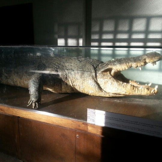 Foto tirada no(a) Singapore Zoo por Henry Chiang 郑. em 12/21/2012