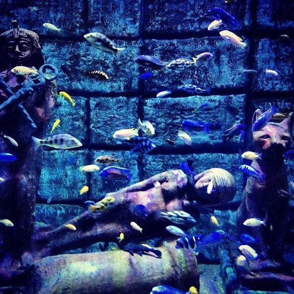 Das Foto wurde bei Antalya Aquarium von Ralfe P. am 6/10/2013 aufgenommen
