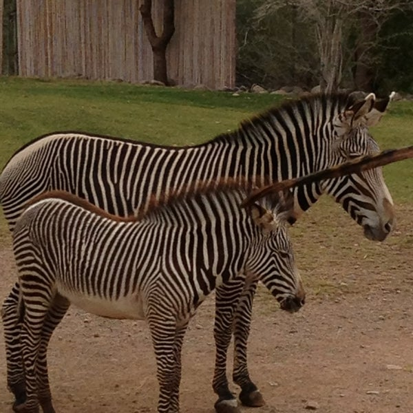 Снимок сделан в Phoenix Zoo пользователем Ashley L. 2/9/2013