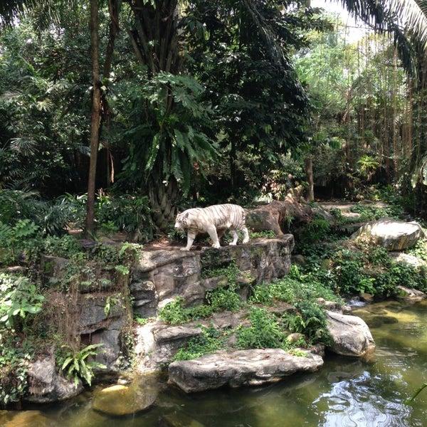 Foto tirada no(a) Singapore Zoo por Marco C. em 8/3/2013