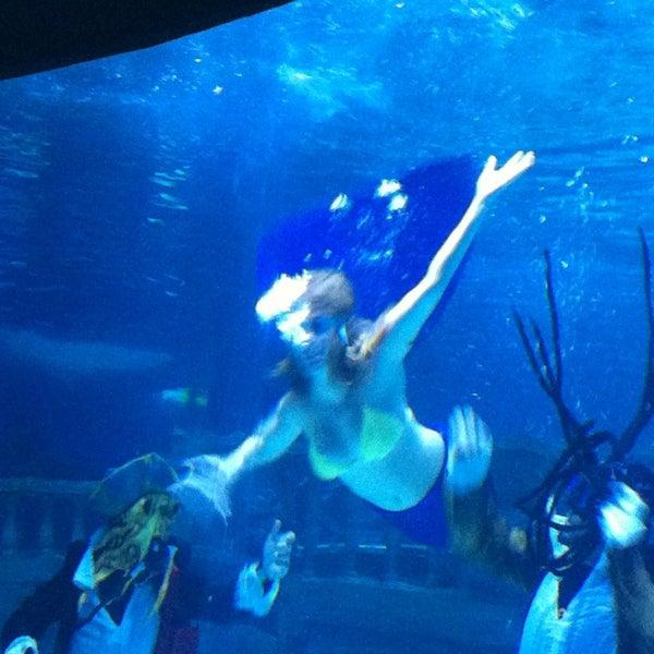 Das Foto wurde bei Antalya Aquarium von İLKER am 2/13/2013 aufgenommen
