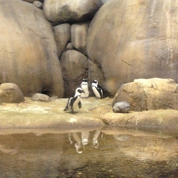 7/22/2013 tarihinde Ben P.ziyaretçi tarafından Minnesota Zoo'de çekilen fotoğraf