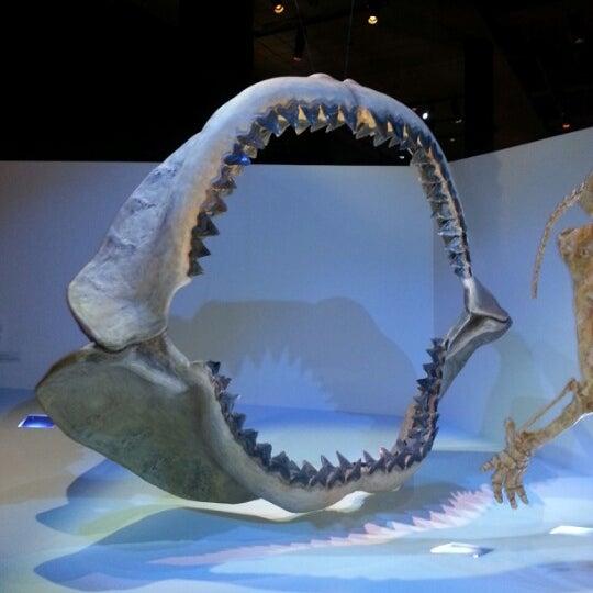 Foto scattata a Houston Museum of Natural Science da Yamin M. il 12/18/2012