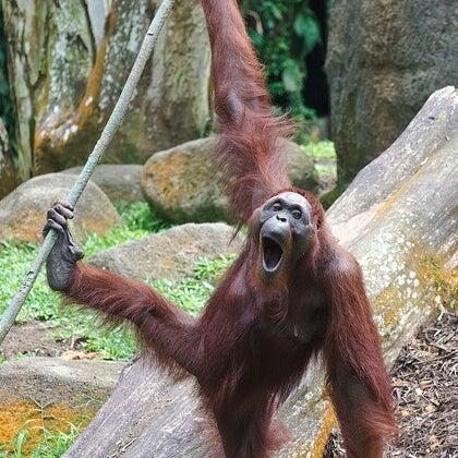 Foto tirada no(a) Singapore Zoo por Leana L. em 12/2/2012