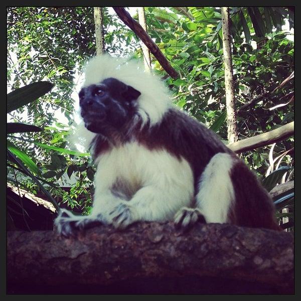 Foto tirada no(a) Singapore Zoo por Anton Z. em 1/12/2013