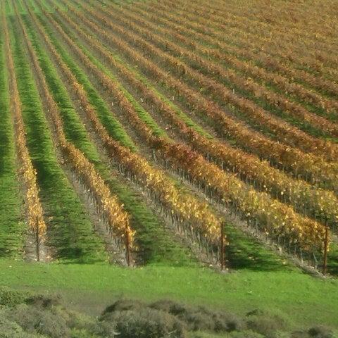 Das Foto wurde bei Gloria Ferrer Caves & Vineyards von Lelet S. am 11/23/2012 aufgenommen