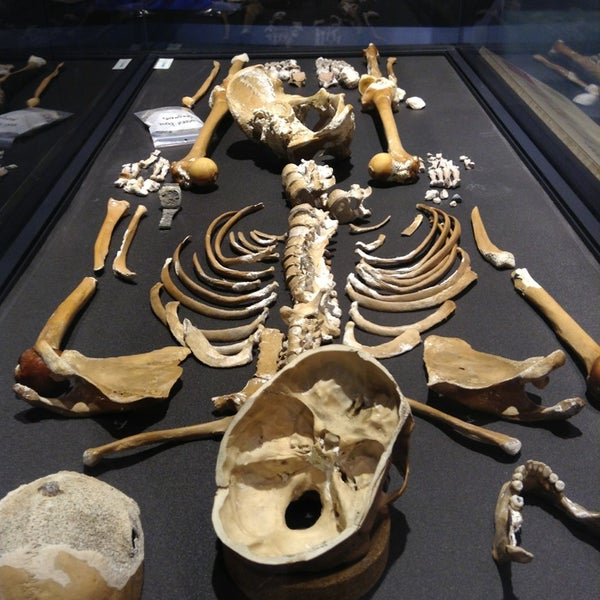 Forensic Anthropology Lab Smithsonian S National Museum Of Natural History Museum In Washington