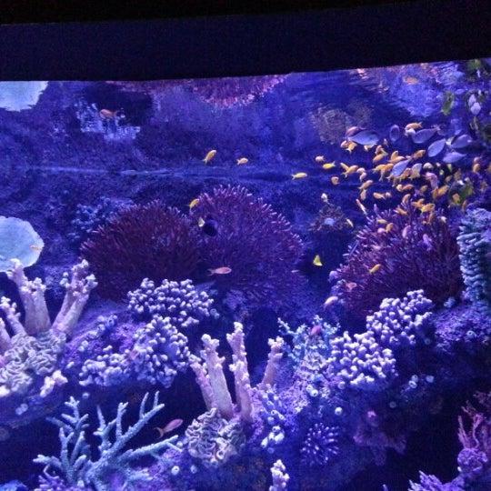 Das Foto wurde bei Antalya Aquarium von Şebnem Ü. am 1/27/2013 aufgenommen