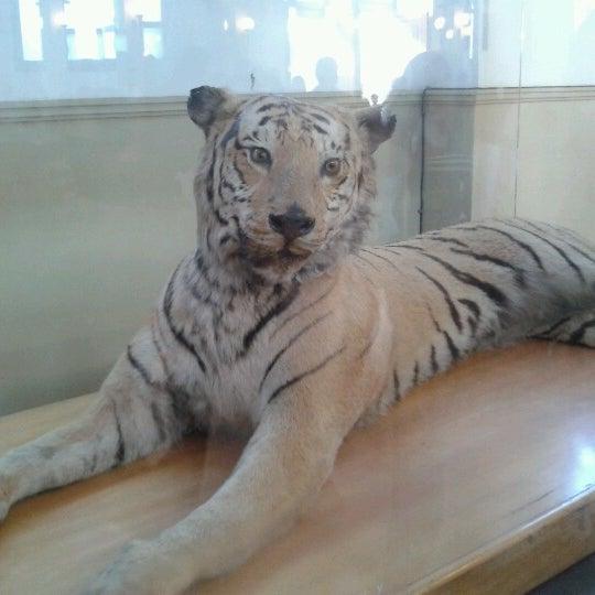7/15/2012にNicolle Bernardette B.がMuseo Nacional de Historia Naturalで撮った写真