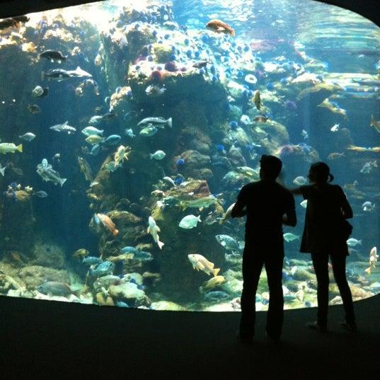 รูปภาพถ่ายที่ California Academy of Sciences โดย Kelvin L. เมื่อ 6/23/2012