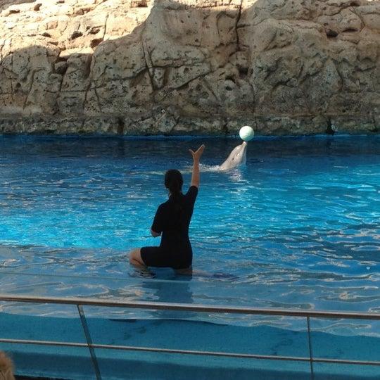 5/21/2012にAndrew C.がTexas State Aquariumで撮った写真