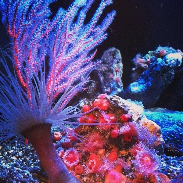 Das Foto wurde bei Aquarium of the Pacific von | tara | B. am 2/22/2013 aufgenommen