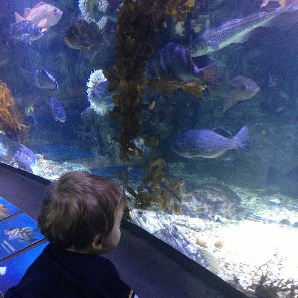 Das Foto wurde bei Aquarium of the Pacific von Chris Q. am 5/20/2013 aufgenommen