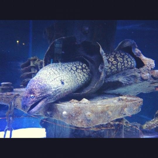 Das Foto wurde bei Antalya Aquarium von Zeynep Ç. am 10/29/2012 aufgenommen
