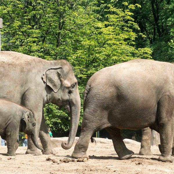 8/7/2014에 Zoologischer Garten Berlin님이 Zoologischer Garten Berlin에서 찍은 사진