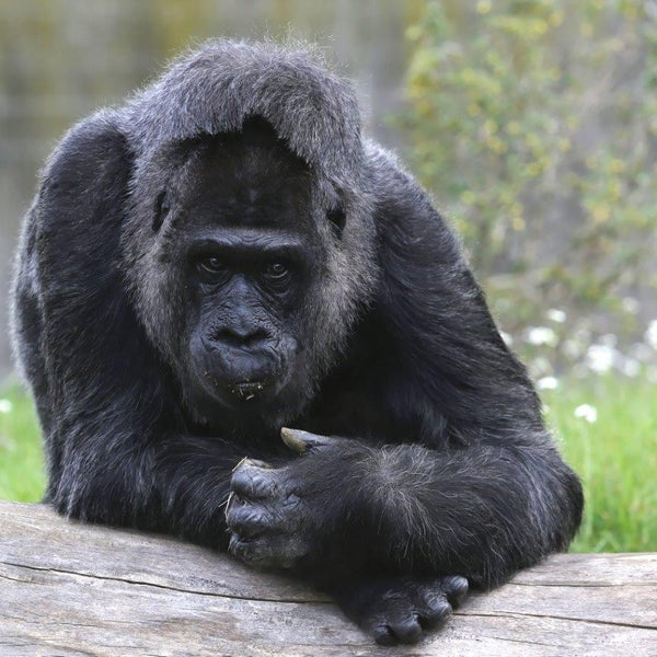 4/15/2014에 Zoologischer Garten Berlin님이 Zoologischer Garten Berlin에서 찍은 사진
