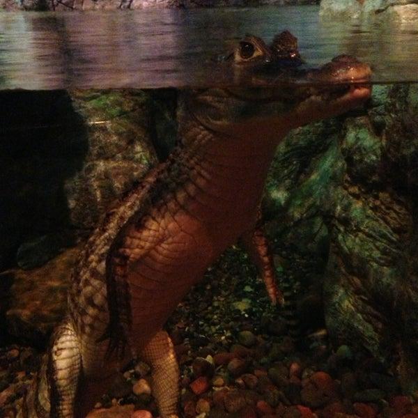 Foto diambil di SEA LIFE Minnesota Aquarium oleh Ana A. pada 1/1/2013