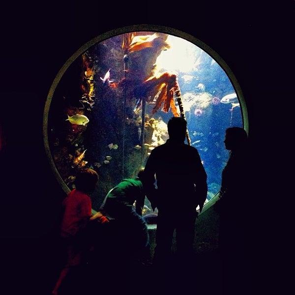 รูปภาพถ่ายที่ California Academy of Sciences โดย Caroline W. เมื่อ 3/17/2013