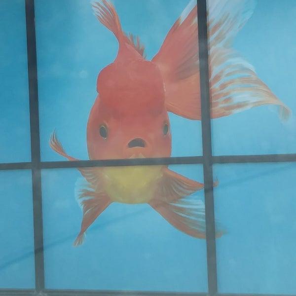 Photos at Petco - Pet Store in Ventura