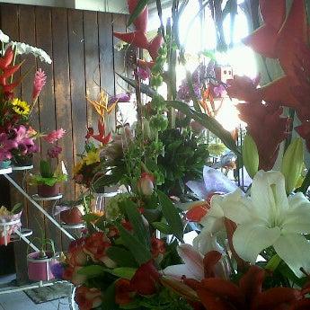 11/10/2012にGibrán M.がFlorería Flores de Oaxacaで撮った写真