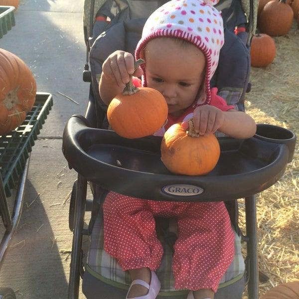 Foto tirada no(a) Nick's Garden Center & Farm Market por Laura E. P. em 10/17/2014