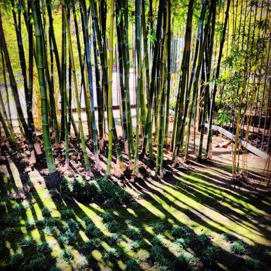1/12/2013にAgnieszka J.がJapanese Friendship Gardenで撮った写真