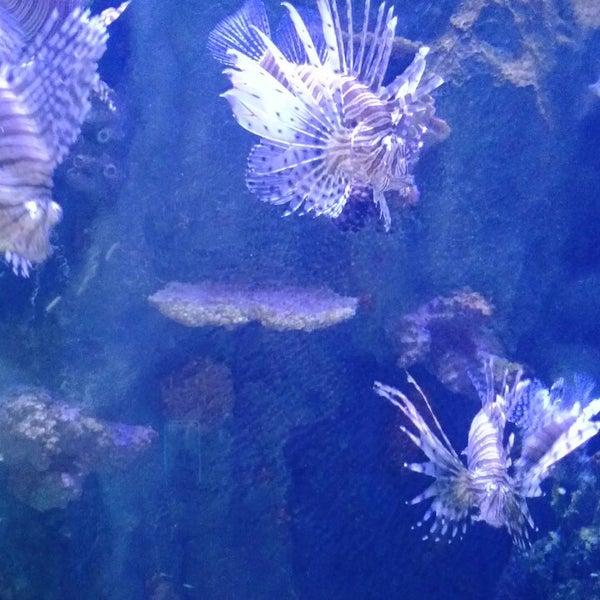 Das Foto wurde bei Antalya Aquarium von Анна Ф. am 6/24/2013 aufgenommen