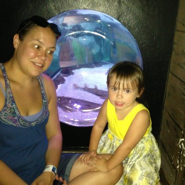 7/14/2013에 Joshua K.님이 SEA LIFE Minnesota Aquarium에서 찍은 사진