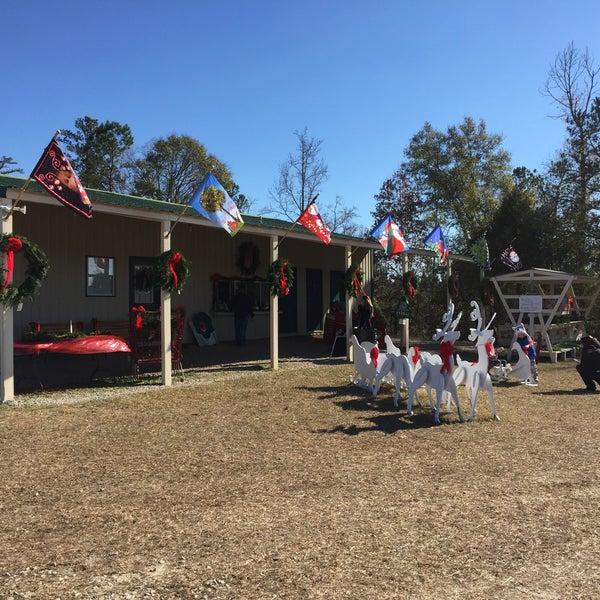 Clarks Hill Christmas Tree Farm
