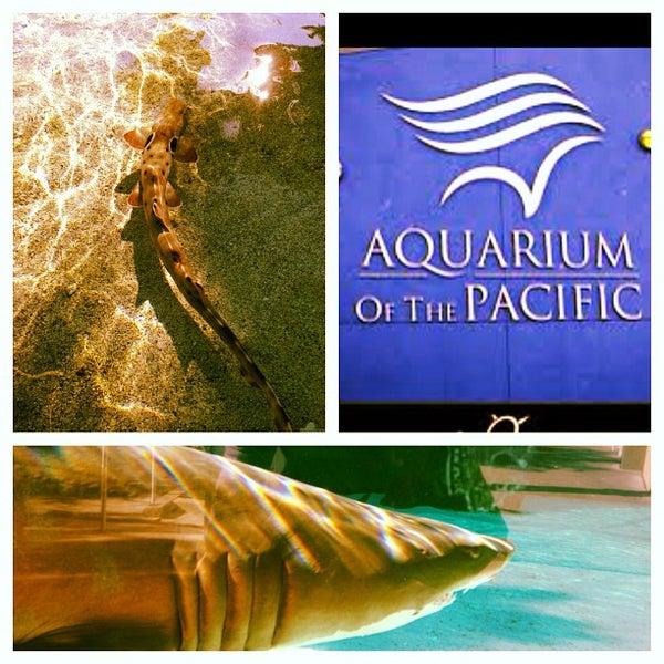 Das Foto wurde bei Aquarium of the Pacific von Derek V. am 12/20/2012 aufgenommen