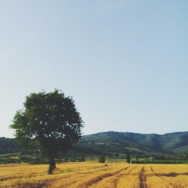 7/30/2014 tarihinde Giulio T.ziyaretçi tarafından Passignano sul Trasimeno'de çekilen fotoğraf
