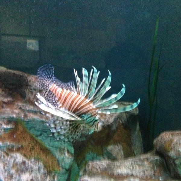 5/27/2013 tarihinde Alex M.ziyaretçi tarafından Texas State Aquarium'de çekilen fotoğraf