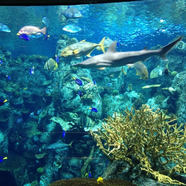 Das Foto wurde bei Aquarium of the Pacific von B. Rod am 12/29/2012 aufgenommen