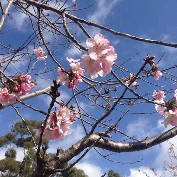 3/9/2013にRyaneric M.がJapanese Friendship Gardenで撮った写真