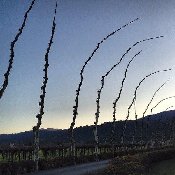 Photo prise au Peju Province Winery par Allanie Y. le2/18/2013