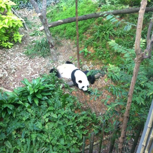 Foto tirada no(a) Singapore Zoo por Marina S. em 1/5/2013