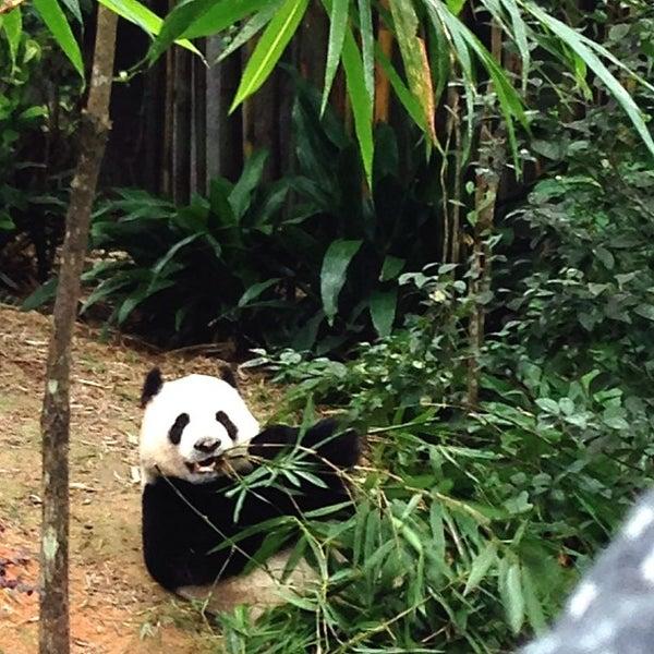 Foto tirada no(a) Singapore Zoo por Lystraa C. em 1/20/2013