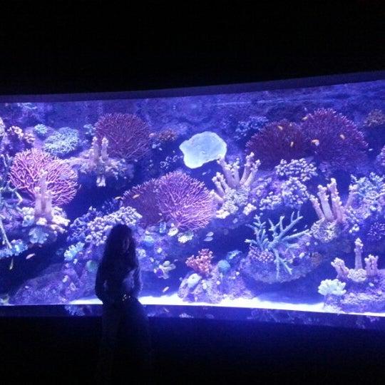 Das Foto wurde bei Antalya Aquarium von Sinan I. am 1/27/2013 aufgenommen