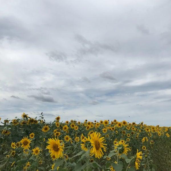 Снимок сделан в Fishkill Farms пользователем Netta K. 9/22/2018