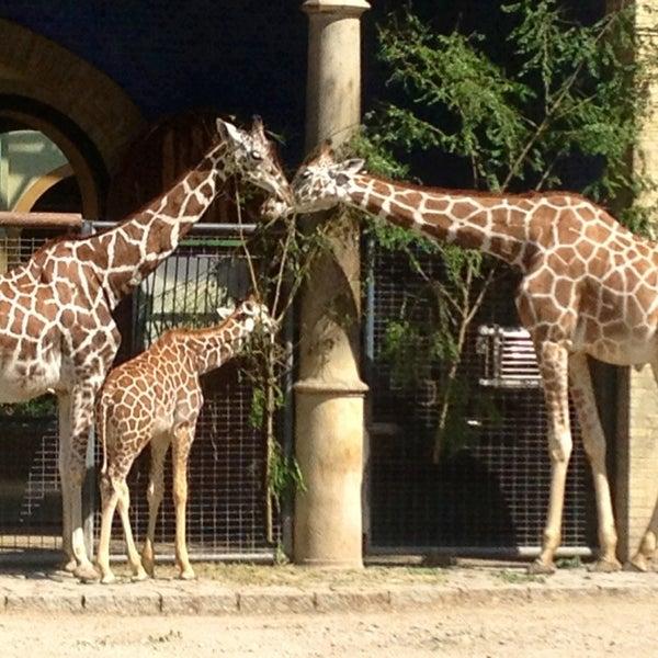 8/22/2013에 Belly M.님이 Zoologischer Garten Berlin에서 찍은 사진