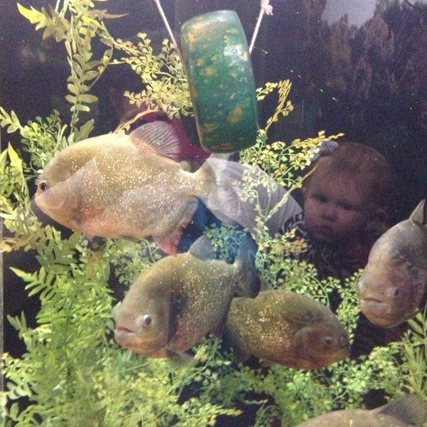 12/26/2012にKristin I.がTexas State Aquariumで撮った写真