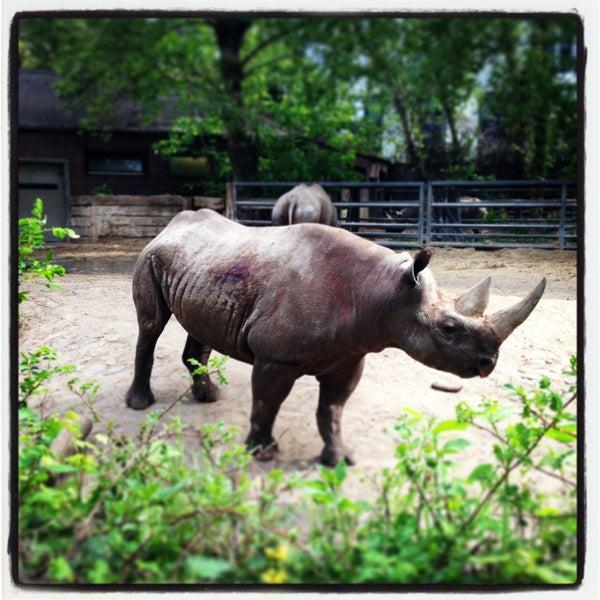 5/3/2013에 🌸Ma_risha님이 Zoologischer Garten Berlin에서 찍은 사진