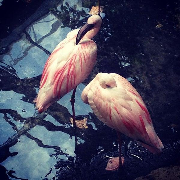 6/25/2013 tarihinde Carissa Z.ziyaretçi tarafından Minnesota Zoo'de çekilen fotoğraf