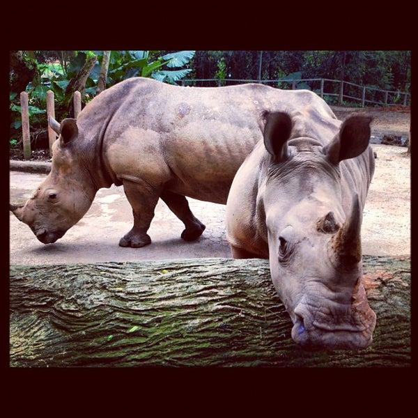 Foto diambil di Singapore Zoo oleh Martin T. pada 12/3/2012