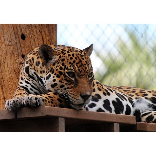 Снимок сделан в Phoenix Zoo пользователем Luna S. 6/23/2014