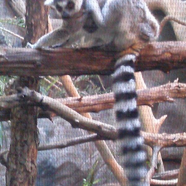 2/16/2013 tarihinde Brooke N.ziyaretçi tarafından Minnesota Zoo'de çekilen fotoğraf